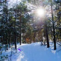 """Painted Woods"" Sandbanks, Picton, Ontario"